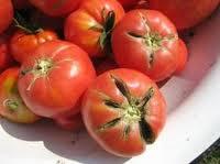 помидоры потрескались